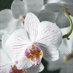 Servilleta Beautiful orchid 33x33cm